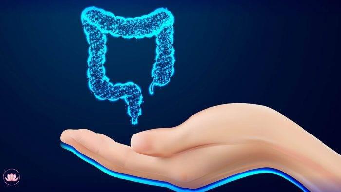 l'intestino in una mano